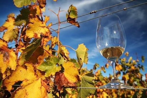 Wijnfeesten in Tsjechië deze herfst