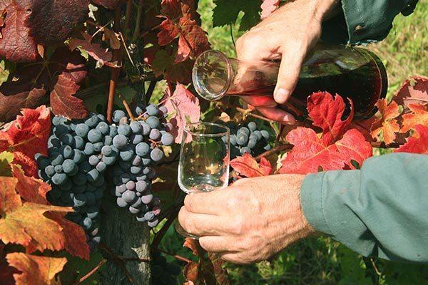 wine celebrations Tsjechie