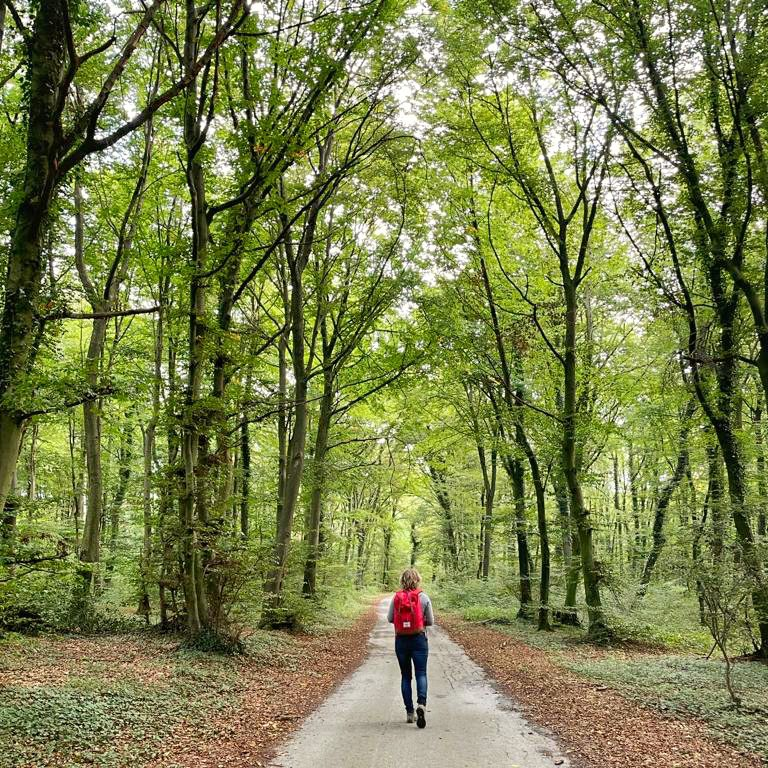 De Blomberg is een perfecte plek voor een mooie hike