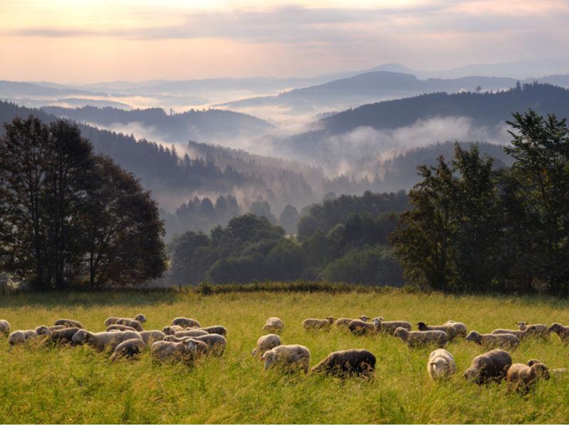 Boheemse woud | Travelvibe