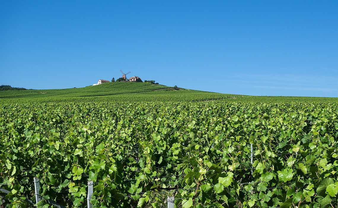 Champagnestreek Frankrijk - Travelvibe