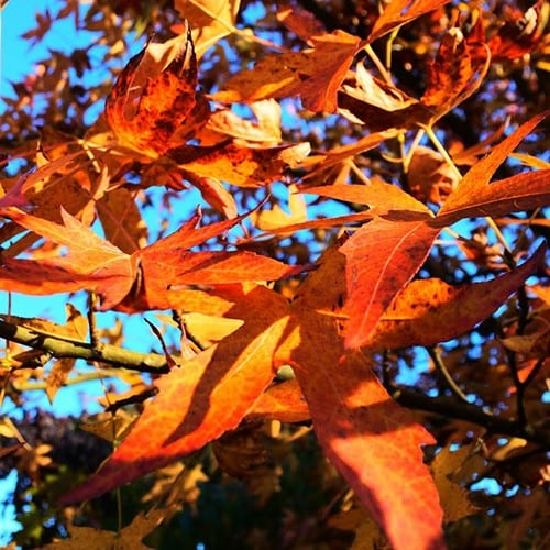 Herfst in Gelderland, mooie herfstfoto's - Travelvibe
