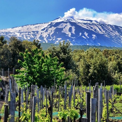 Etna vineyard | Travelvibe