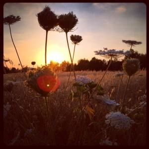 Ibiza Nature