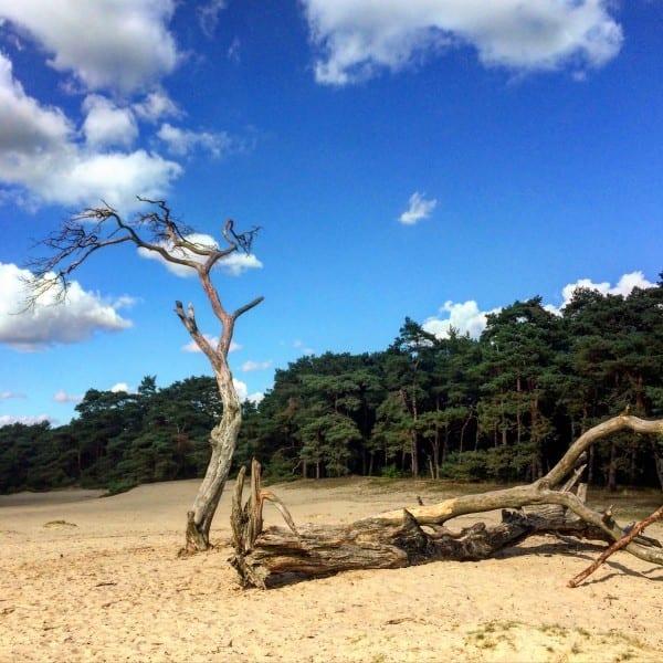 boom en zand