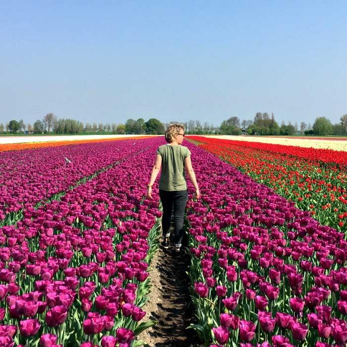 Laag Holland-bloembollenveld-travelvibe