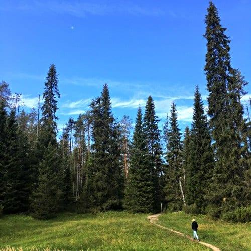 Oulanka National Park 3   Travelvibe