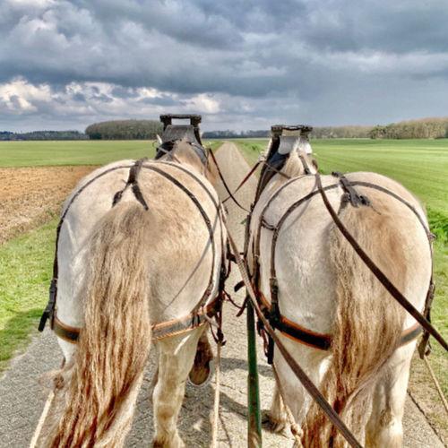 Paard rijden Drenthe| Travelvibe