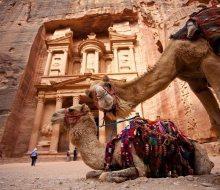 Petra Camels Jordany