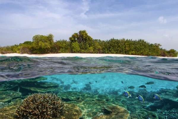 Pineapple Island Malediven - Travelvibe