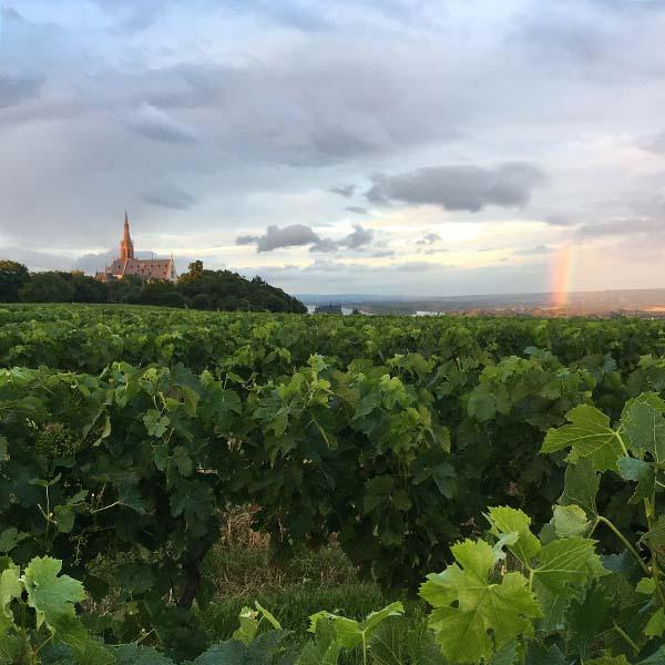 Regenboog in de wijngaard van Bingen am Rhein