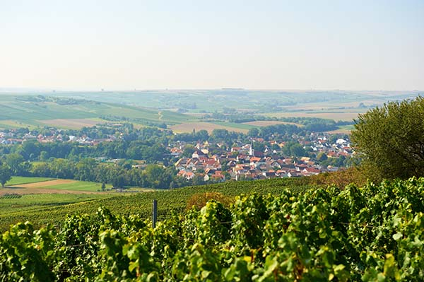 Europese Wijntrip Rheinessen - Travelvibe