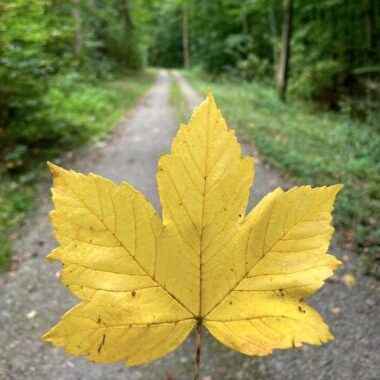 De Herfst op de Blomberg komt dichterbij