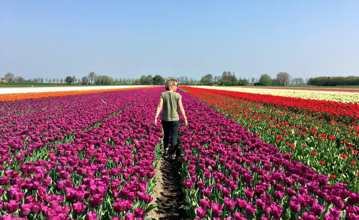 Wit roze bloembollenvelden Travelvibe