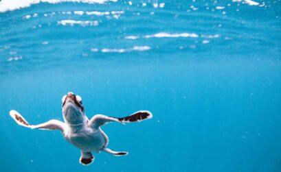Turtle Adventure Omniversum winactie - Travelvibe