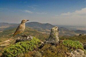 -Vogels kijken Extremadura