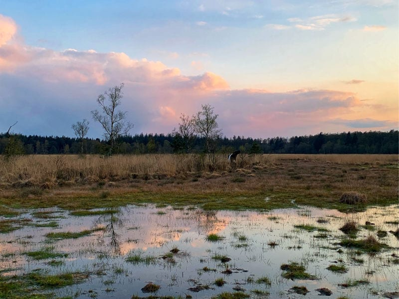 Wandelen met de boswachter | Travelvibe-