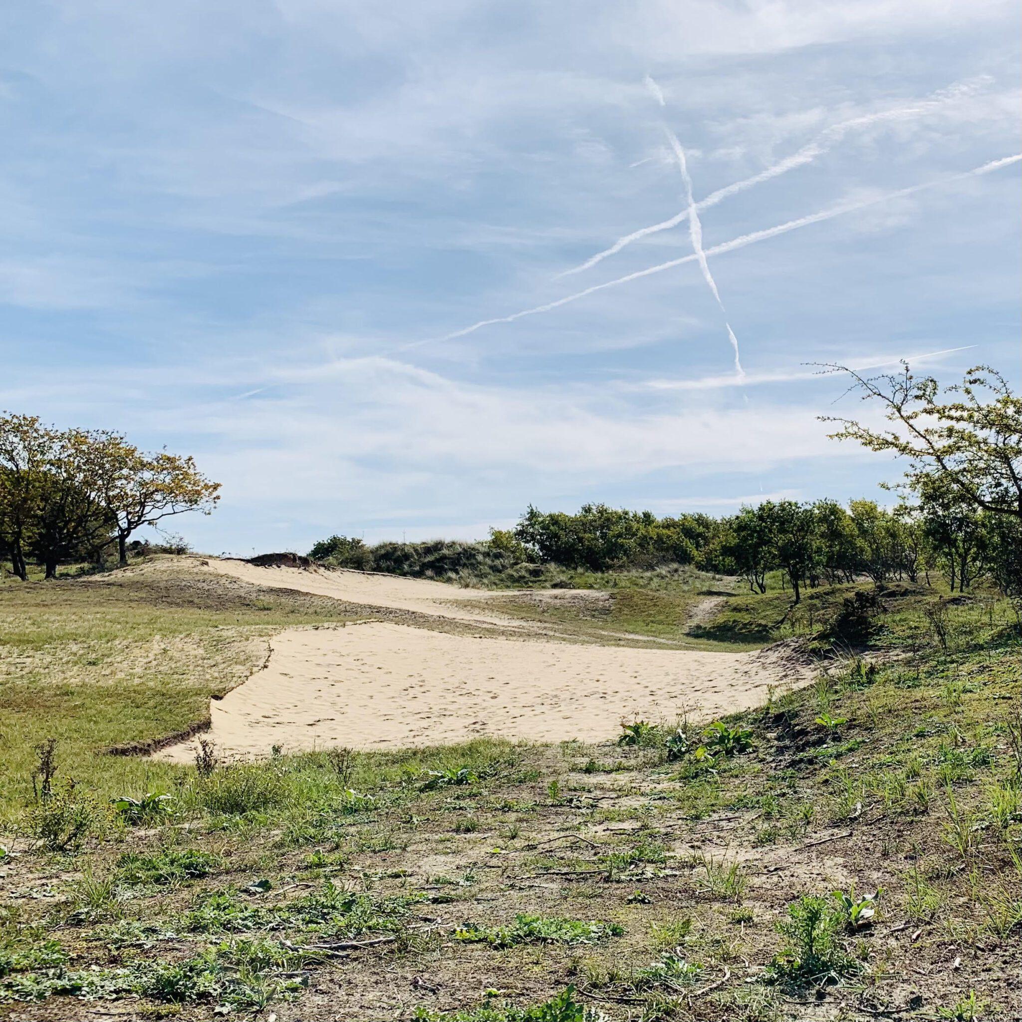 Waterleidingduinen landschap