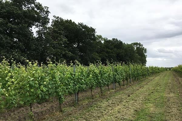 Wijngaard St Nicolaasga Friesland