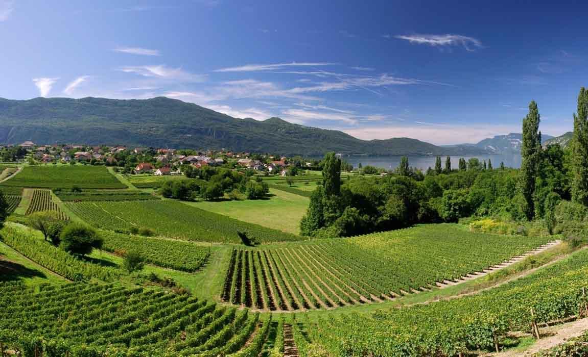 Wijnroutes Alpen Frankrijk Savoie Mont Blanc - Travelvibe