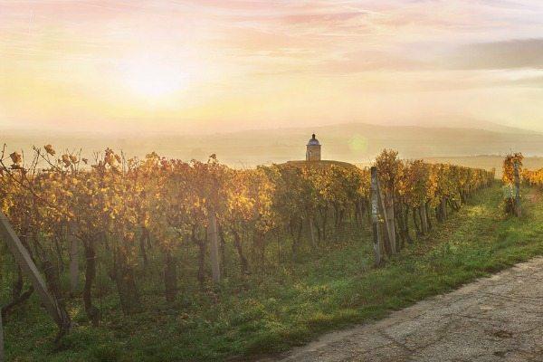 Europese wijnreis - Wijnvelden Tsjechië Zuid Moravie Travelvibe