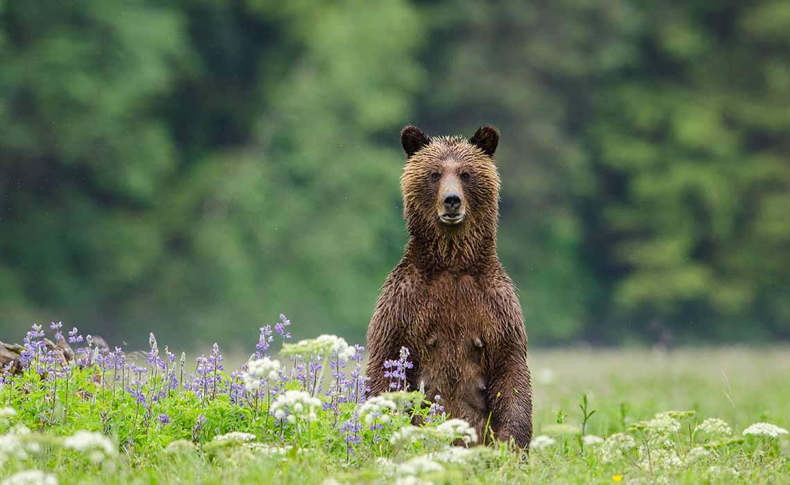Wild Canada Omniversum 2 - Travelvibe