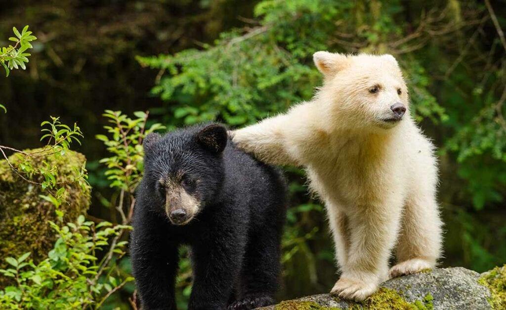 Wild Canada Omniversum - Travelvibe