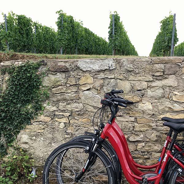 Op de fiets door de wijnvelden Rheinhessen - Travelvibe