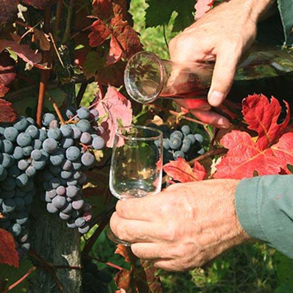 herfsttip wijnfeest in Tsjechie Travelvibe