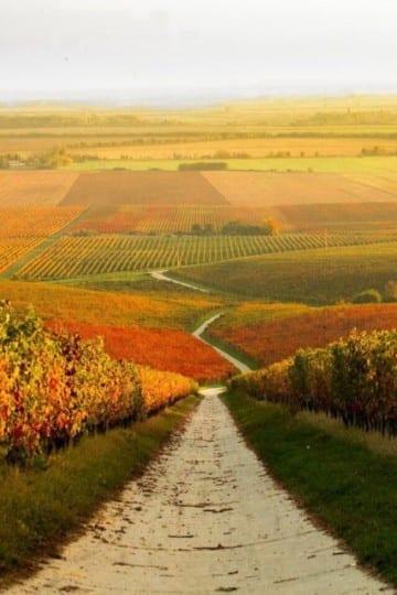 hongarije wijnvelden autumn Travelvibe