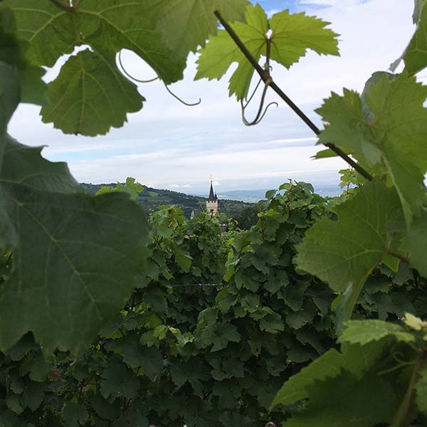Ingelheim church in Vineyards - Travelvibe