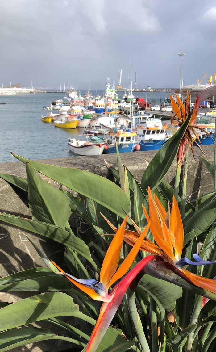 kleurrijk Sao Miguel Azoren - Travelvibe