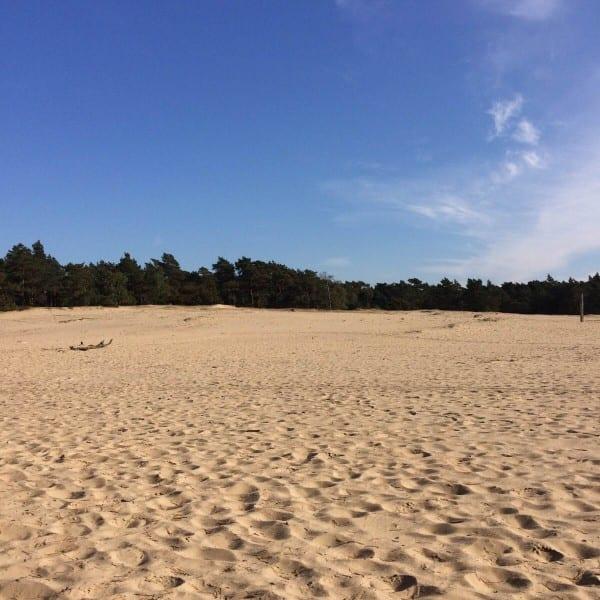 Zand en bos - Travelvibe