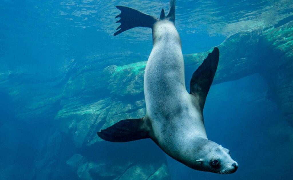 zeeleeuw Nausicaa | Travelvibe